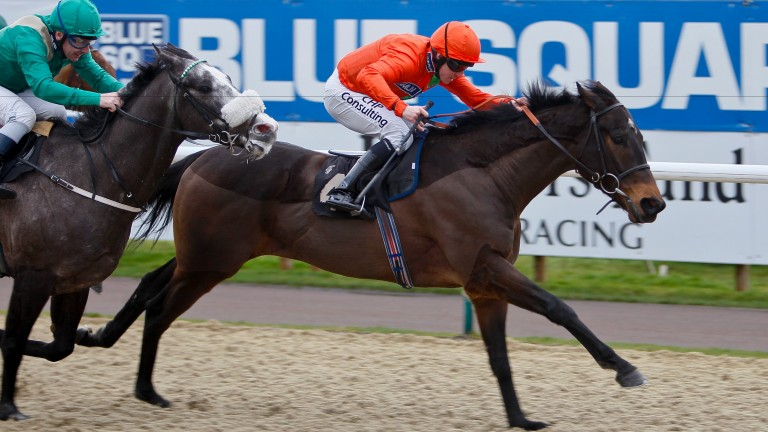 Haaf A Sixpence: in past winning form at Lingfield where he won again on Friday