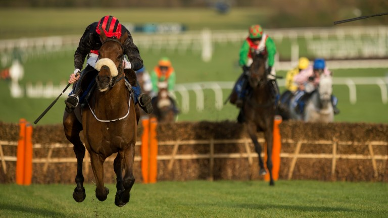 Peregrine Run: won at Cheltenham and is aiming for a second Grade 2