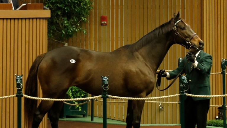 My Conquestadory, a daughter of Artie Schiller was bought in foal to Tapit for $1.5m