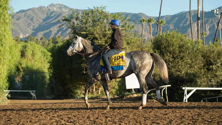 Frosted: is a son of multiple North American champion sire Tapit