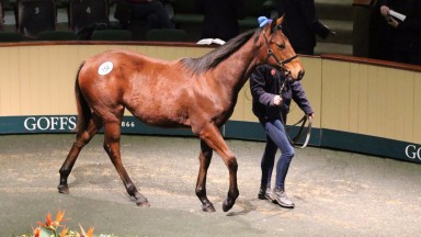 The Fast Company colt in the ring during the first session of trade at Goffs