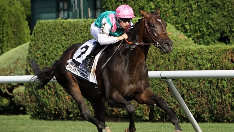 Flintshire: six-year-old son of Dansili has won five top-level races