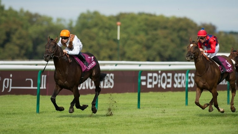 Vadamos (left): son of Monsun starts his stallion career at Tally-Ho Stud in a few months