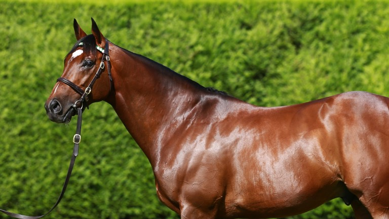 Frankel has sired 18 winners from his first crop of two-year-olds
