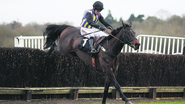 O'Faolains Boy: needs two or three easy weeks and set to return in new year