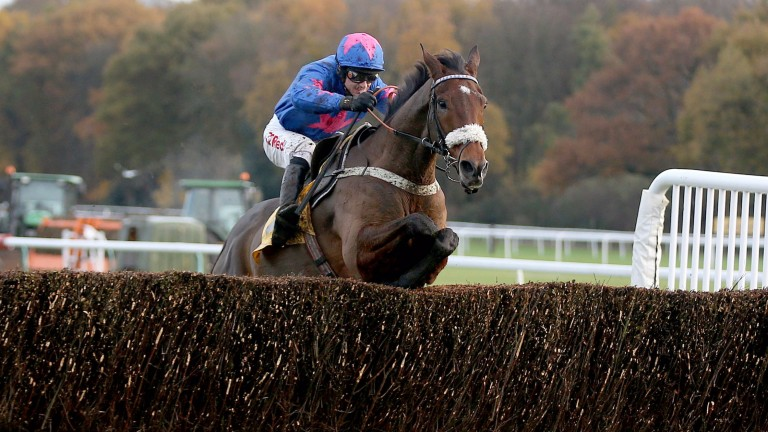 Cue Card: won the Betfair Chase in fine style