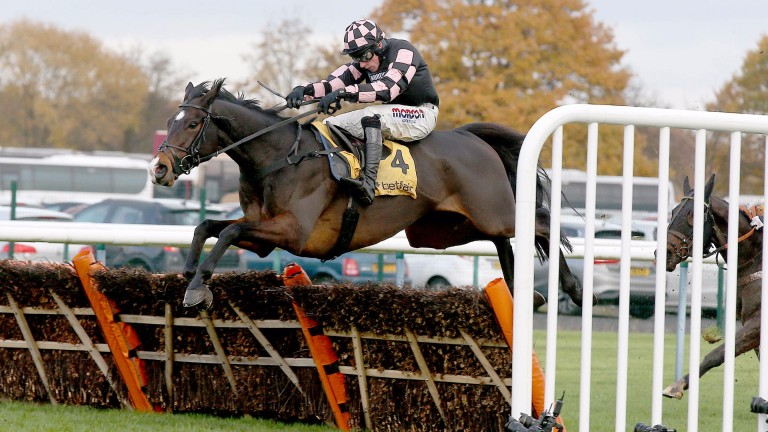 Ch'Tibello: Kingwell runner-up could take his chance in the Champion Hurdle