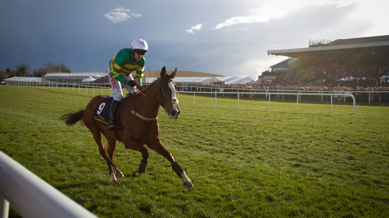 Jer's Girl: is an 8-1 shot for the Mares' Hurdle