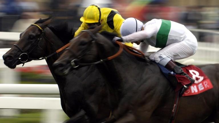 Sleeping Indian (white): began his stallion career at Tweenhills in 2007