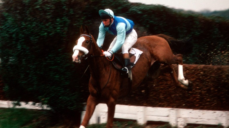 Tingle Creek: two-mile star, seen here in typical spring-heeled form at favourite track Sandown, was one of the most popular jumpers of the last 50 years