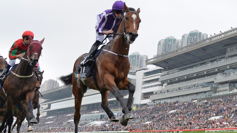 Highland Reel was just denied in his defence of the Hing Kong Vase