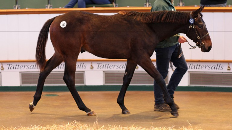 The Gregorian colt selling in the ring for 47,000gns at Tattersalls on Wednesday