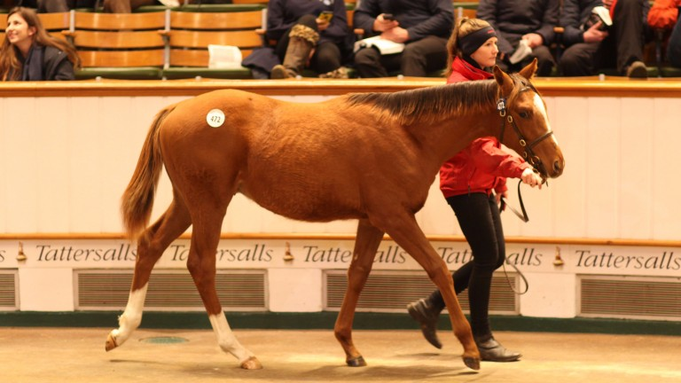 The Kyllachy colt who was bought by Kate Barclay for 48,000gns