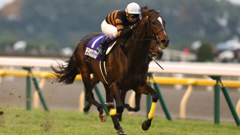 Kitasan Black: could be heading to Ireland later this year