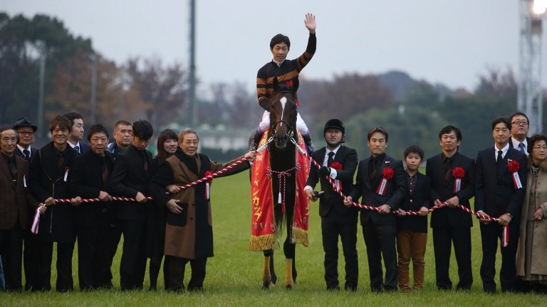 Kitasan Black: the Japan Cup hero hails from the family of Cee's Tizzy