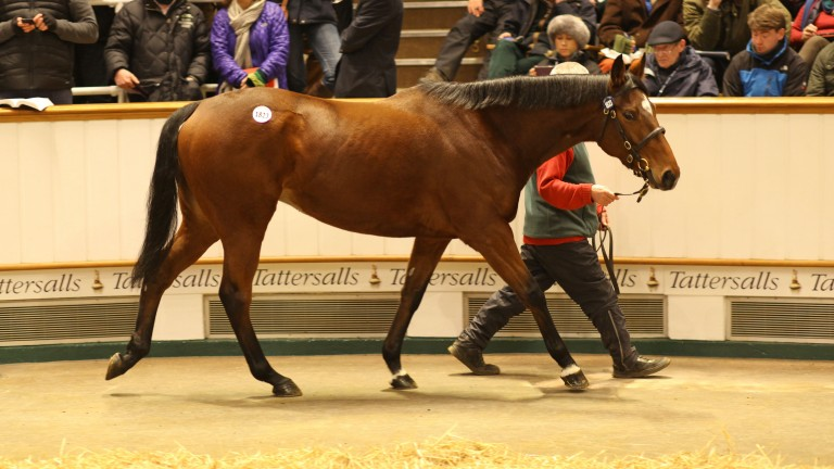 Jack Naylor: in the ring and selling to London Thoroughbred Services at Tattersalls on Tuesday