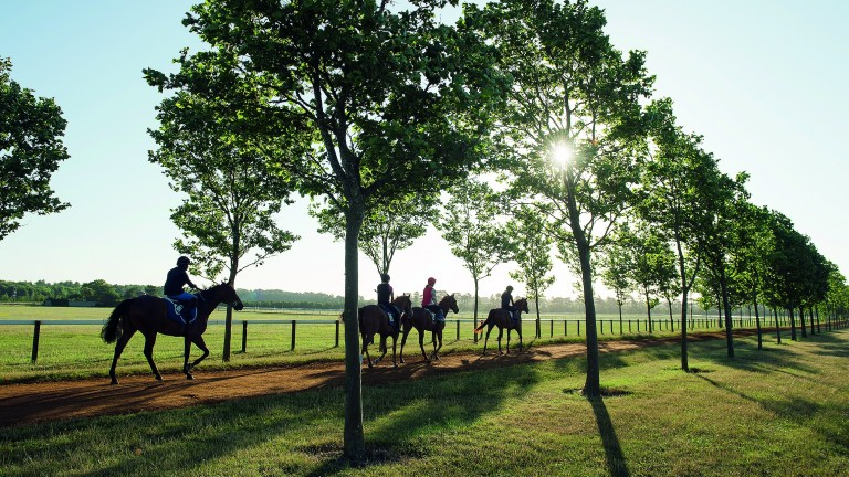 Diomed Stables, where rates are set for a major hike