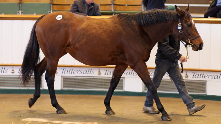 Qatar Princess: the daughter of Marju who sold for 100,000gns