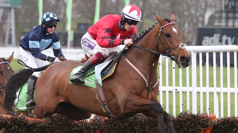 The New One: could run over hurdles at Cheltenham next week