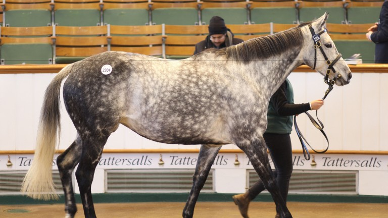 Arabescatta: was bought by Federico Barberini for 38,000gns on Thursday