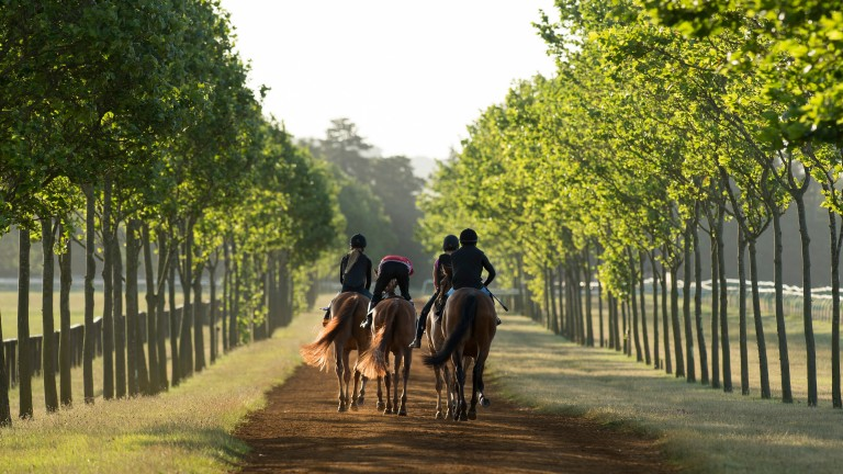 Newmarket trainers are set to be hit with high rises in rates
