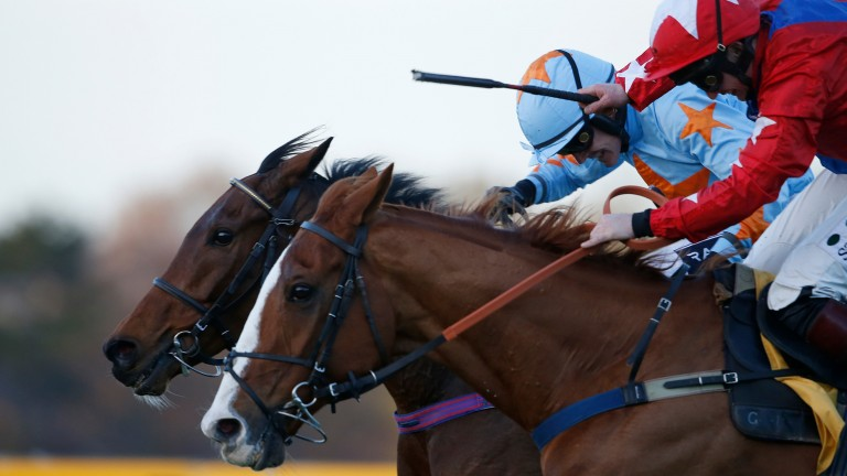 Un De Sceaux (light blue): was bred by Haras de la Rousseliere