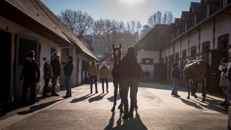 A lot is inspected at the Arqana December Breeding Stock Sale