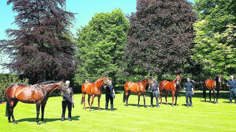 Galileo pictured at the centre of five Derby winners at Coolmore - the others, from left to right, being Pour Moi, Ruler Of The World, Australia and Camelot