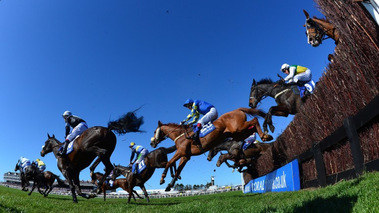 Ayr: no fireworks before Saturday's jumps card
