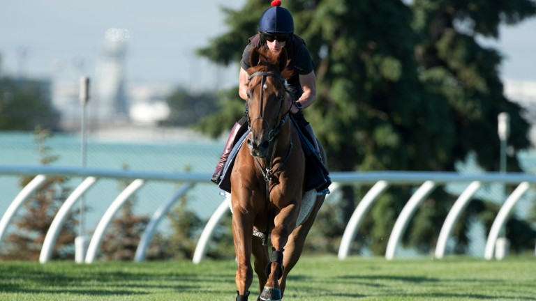 Mutakayyef: set to head William Haggas team at Dubai Carnival