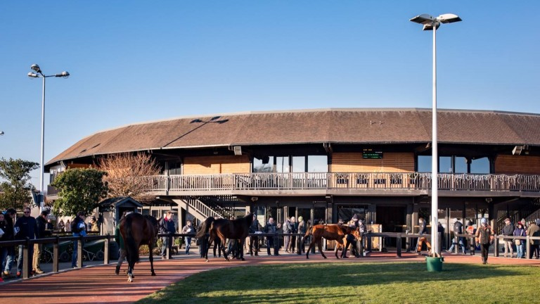 Arqana: lots prepare to enter the ring at the Breeding Stock Sale