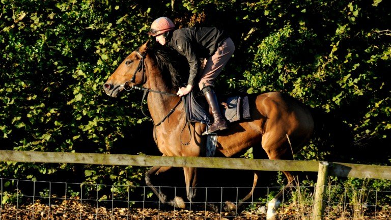 Buywise exercises on the gallops under Conor Ring