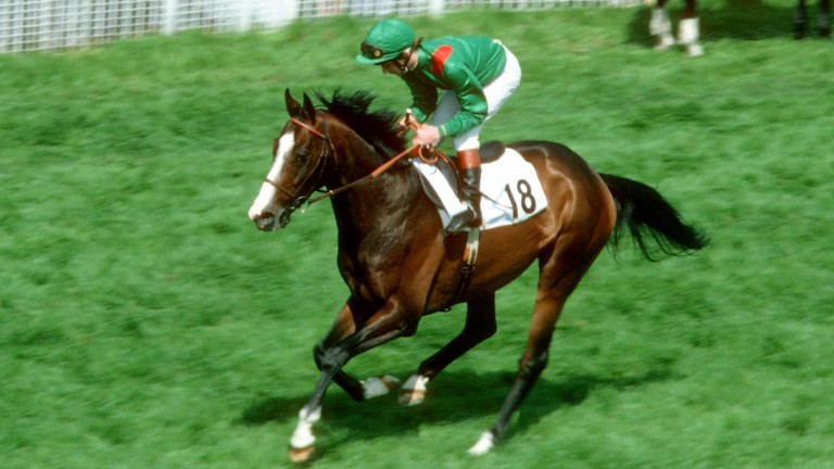Shergar: syndicated as a stallion with a value of £10 million