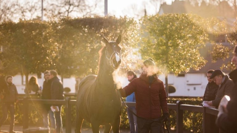 Arqana: the December Sale ended with around a ten per cent reduction in turnover