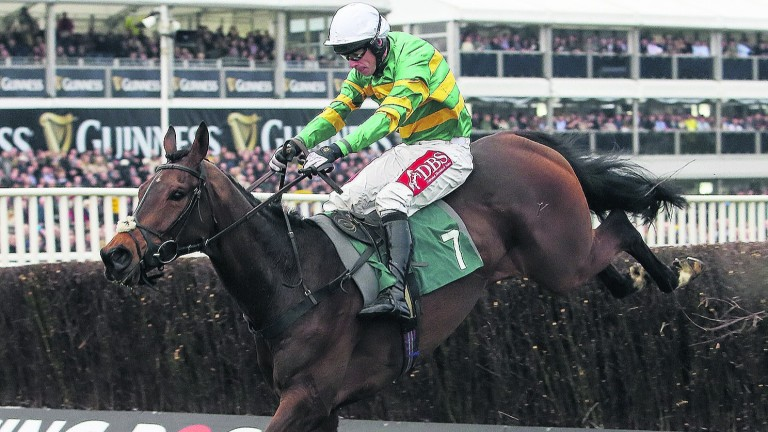 Minella Rocco: second in the Cheltenham Gold Cup