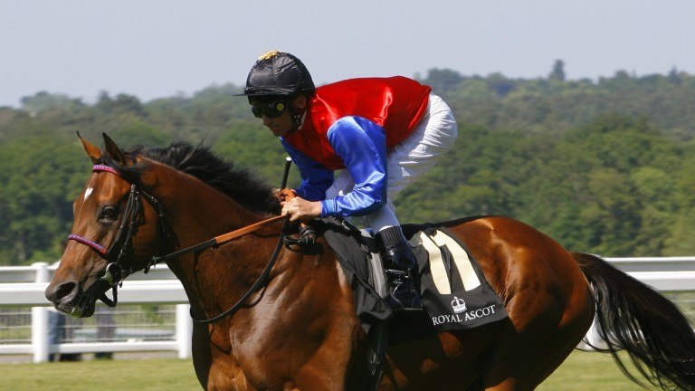 Wiener Walzer: bought by Turkish Jockey Club to continue his stud career