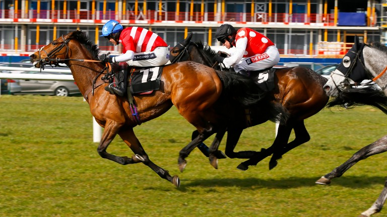 Briery Queen (spots) chases Lady Of Lamanver up the Newbury run-in