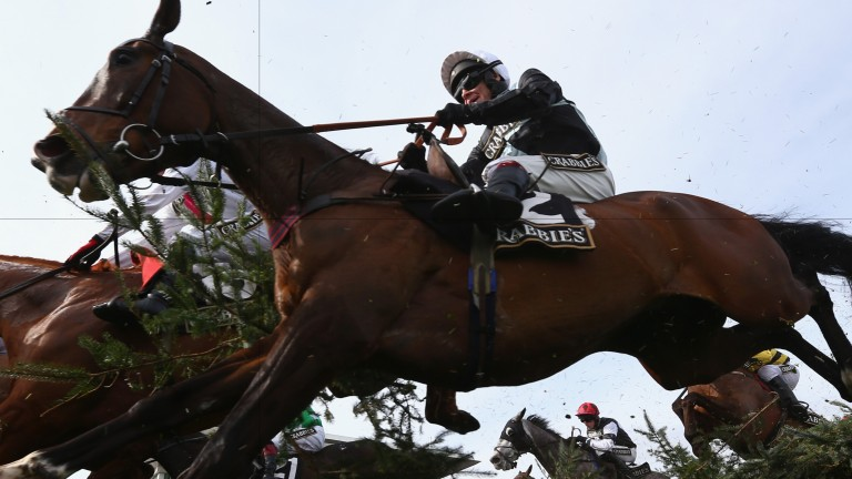 Village Vic: would prove hugely popular winner of the Festival Plate