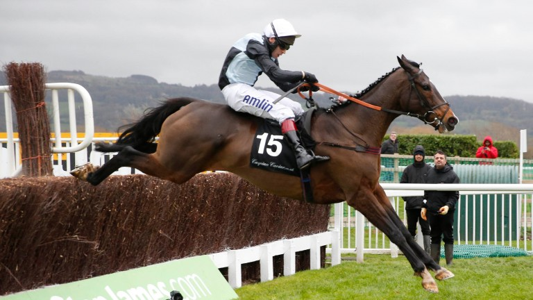 Village Vic: will be looking to go one better than when second in BetVictor Gold Cup