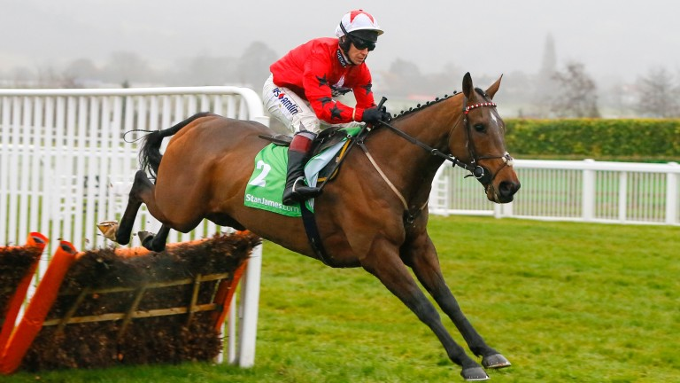 The New One: could he be Britain's best Champion Hurdle hope again?