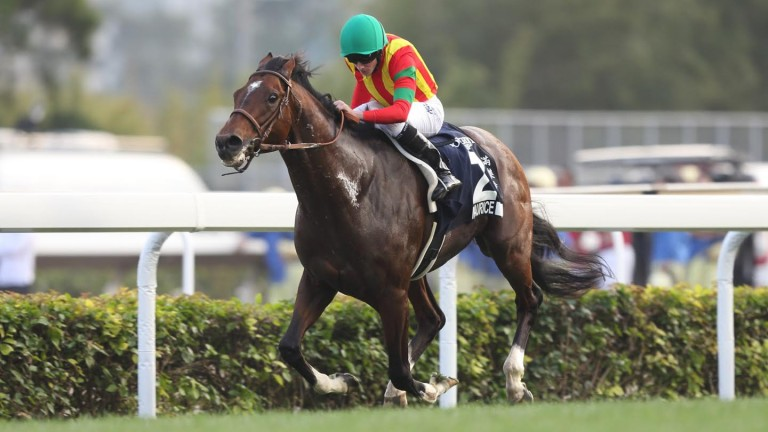 Maurice and Ryan Moore storm home in the Hong Kong Cup on Sunday