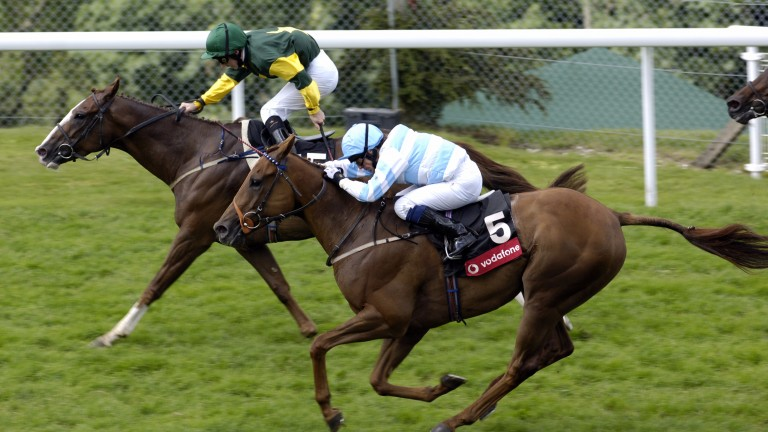 Fonthill Road (green): prolific sprinter was supplied by Royal Abjar