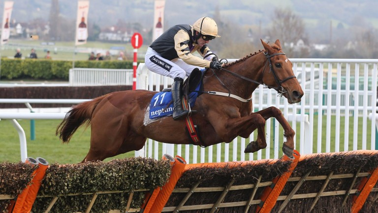 Yorkhill: son of Presenting was one of the leading novice hurdlers last season