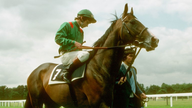 Hail the king: Swinburn returns victorious at Ascot on Shergar, the Aga Khan-trained star who won the King George VI and Queen Elizabeth Stakes in 1981