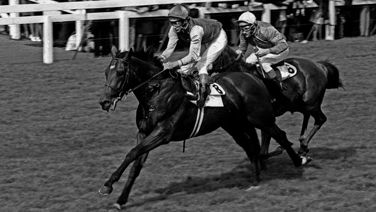 Nijinsky: sire of Jendali was the last horse to complete the Triple Crown in 1970