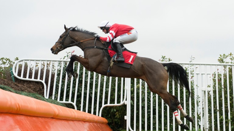 Coneygree: '90 per cent certain' to miss Cheltenham Festival