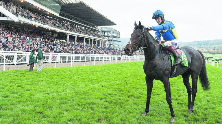 Caid Du Berlais: winner of the 2014 Paddy Power Gold Cup at Cheltenham
