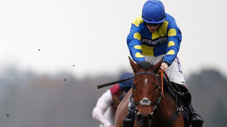Le Mercurey: could prove a Grand National candidate for Paul Nicholls