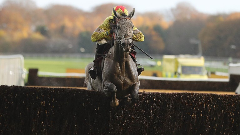 Politologue is now firmly in contention for top novice chases