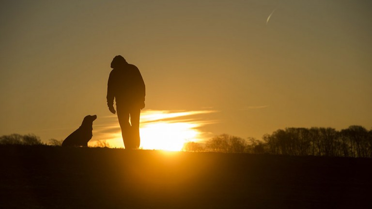 Man's best friend: Nicky Henderson and his labrador Meg watch the sunrise on the Lambourn gallops